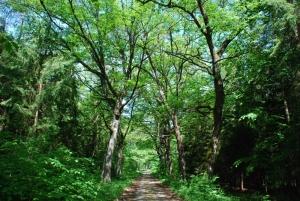 Posiadasz zdjęcia gołdapskiej przyrody? Opublikuj je w albumie!